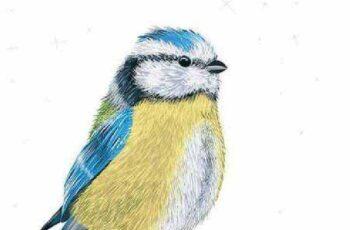 1701024 Birds 6 EPS