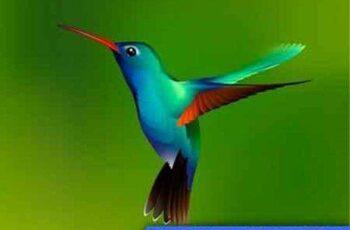 1701098 Hummingbird 13 EPS 7