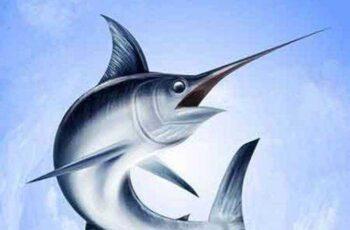 1701115 Marlin Fish 25 Vector 6