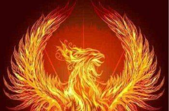 1701128 Phoenix vector 25 EPS 7