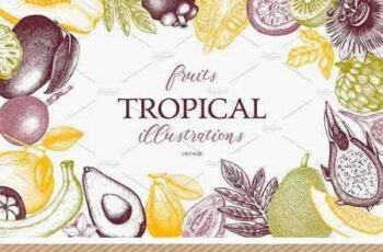 1704137 Tropical Fruits Collection 1501322