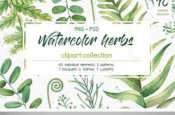1706094 Watercolor Herbs Clipart Collection 1818264 8