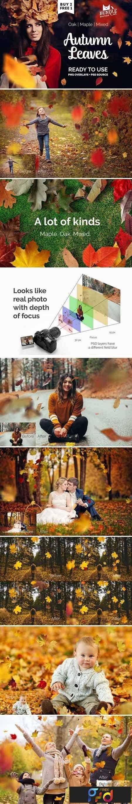 1706232 Autumn Leaves Photo Overlay 1870503 1