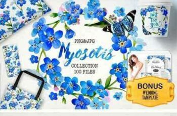 1707021 Myosotis Flowers PNG Watercolor Set 1920321