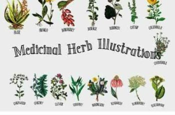 1707138 Medicinal Herb Collection 1 1939591 8