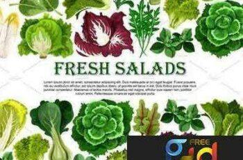 1707212 Salad leaf, vegetable greens banner border design 1956132 5