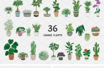 1801282 Indoor Plants 2181673 7