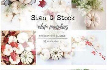 1804174 White Pumpkins Stock Photo Bundle 1949337
