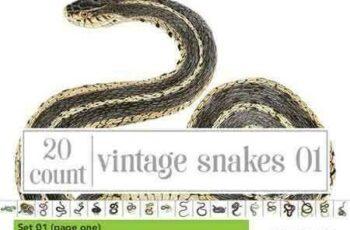 1804253 Watercolor Snake Bundle Set 01 2230889 5