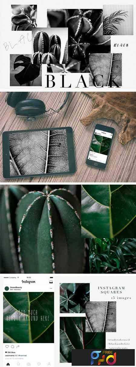 1805035 15 Green Plant Insta Square Photos 2222057 1