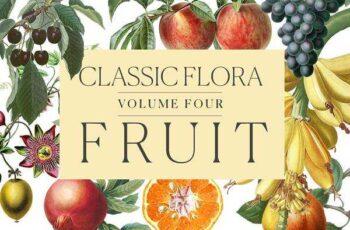 1805235 Botanical Illustrations -Fruit 2255936 6