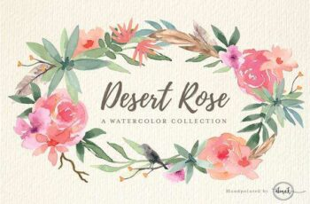 1805277 Desert Rose 1543769 2