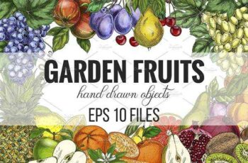 1805279 Garden Fruits, vector collection 2404657 8