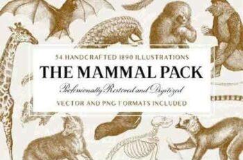 1807090 54 Handcrafted Mammal Illustrations 2511172 2
