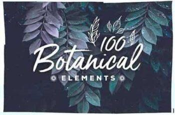1810159 100 Handsketched Botanical Elements 2810768 4