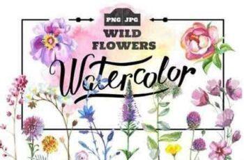 1811299 Wild Flowers watercolor PNG set 932555 5