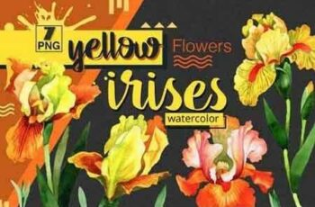 1811300 Yellow irises watercolor PNG clipart 1539921 5