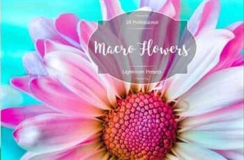 1812130 Macro Flowers Lr Presets 2941642 2