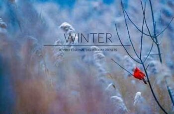 1812259 Winter Lr Presets 2965774 4