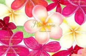 Plumeria Tropical watercolor flowers 3485422 3