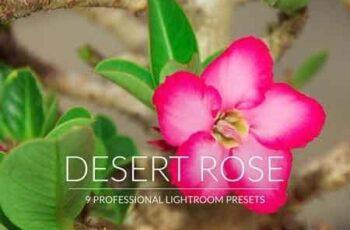 Desert Rose Lr Presets 3494044 4