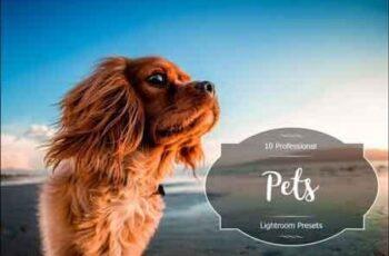 Pets Lr Presets 3490949 4