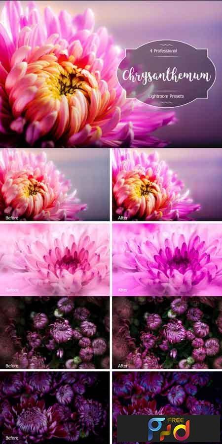 Chrysanthemum Lr Presets 3488254 1
