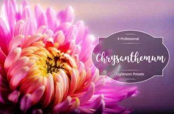 Chrysanthemum Lr Presets 3488254 4