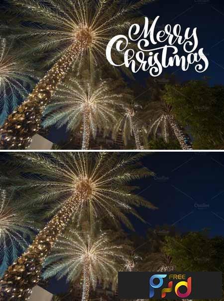 Christmas palm 2127725 1