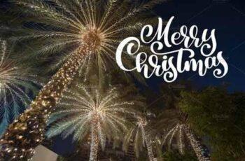 Christmas palm 2127725 5