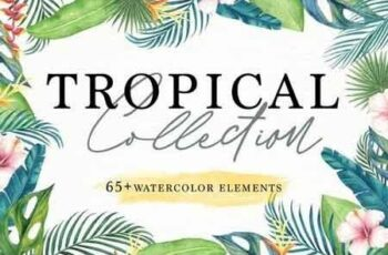 Tropical Collection 3066117 6