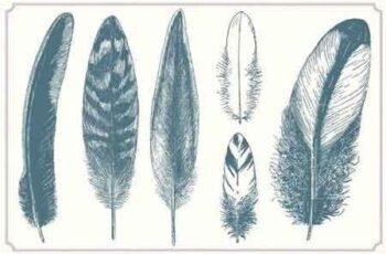 Vintage Feathers 1253113 3