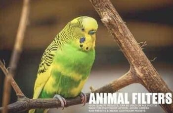 17 Animal Lightroom Presets 1167174 5