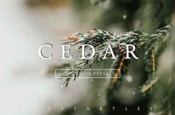 CEDAR Subtle Moody Lightroom Presets 3313228 6