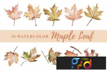 10 Watercolor Maple Leaf Illustration Graphics 4