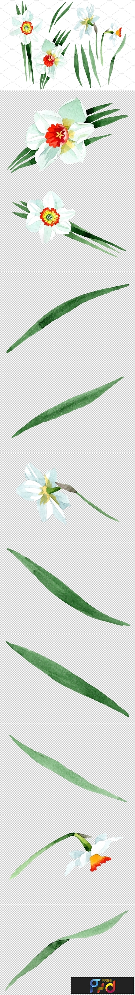 White narcissus Watercolor png 3484024 1