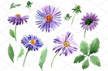 Asters Watercolor png 3486269 6