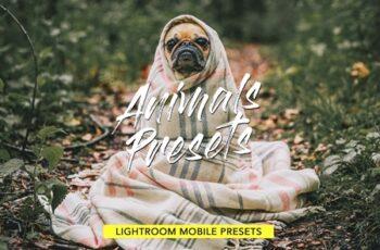 Animals Lightroom Presets Bundle 3605043 3