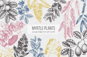 Myrtle Plants Collection 2799313 9