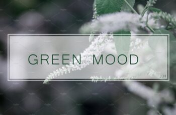 GREENMOOD Inspired Lightroom Preset 3482078 5