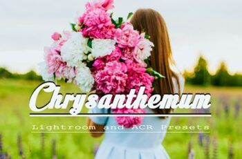 Chrysanthemum Lightroom and ACR Presets 10