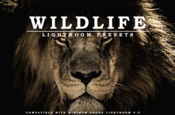 Wildlife Lightroom Presets 5