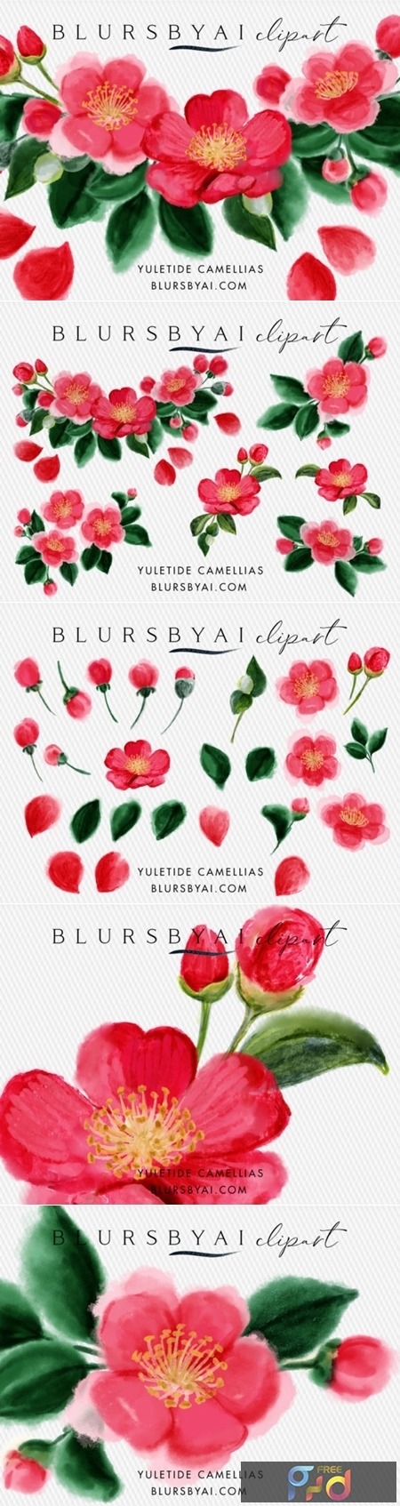 Winter Yuletide Camellias Clipart 1558195 1