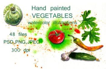 Watercolor Illustrations Vegetables 1657912 7