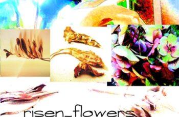 A Risen Flower 1708988 4
