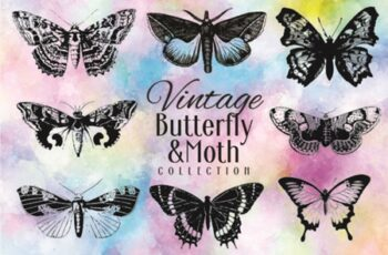 Vintage Butterfly Collection 1715315 6
