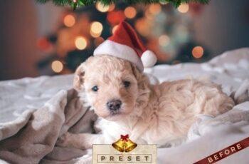 4 Lightroom Presets - Christmas Pack (+Mobile Version) 22934844 4