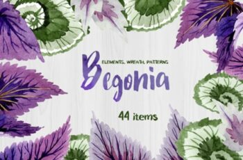 Decorative Begonia Purple Watercolor 1823092 3