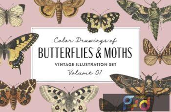 Butterflies & Moths Vintage Graphics Vol. 1 C5HTPM7 4