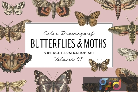 Butterflies & Moths Vintage Graphics Vol. 3 VNT3LZE 1